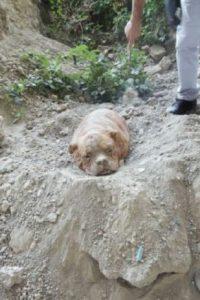 El perro fue recuperado. Foto:vía Facebook/Pedro Dinis