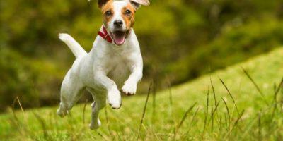 Servicio británico de salud público usará perros para detectar cáncer