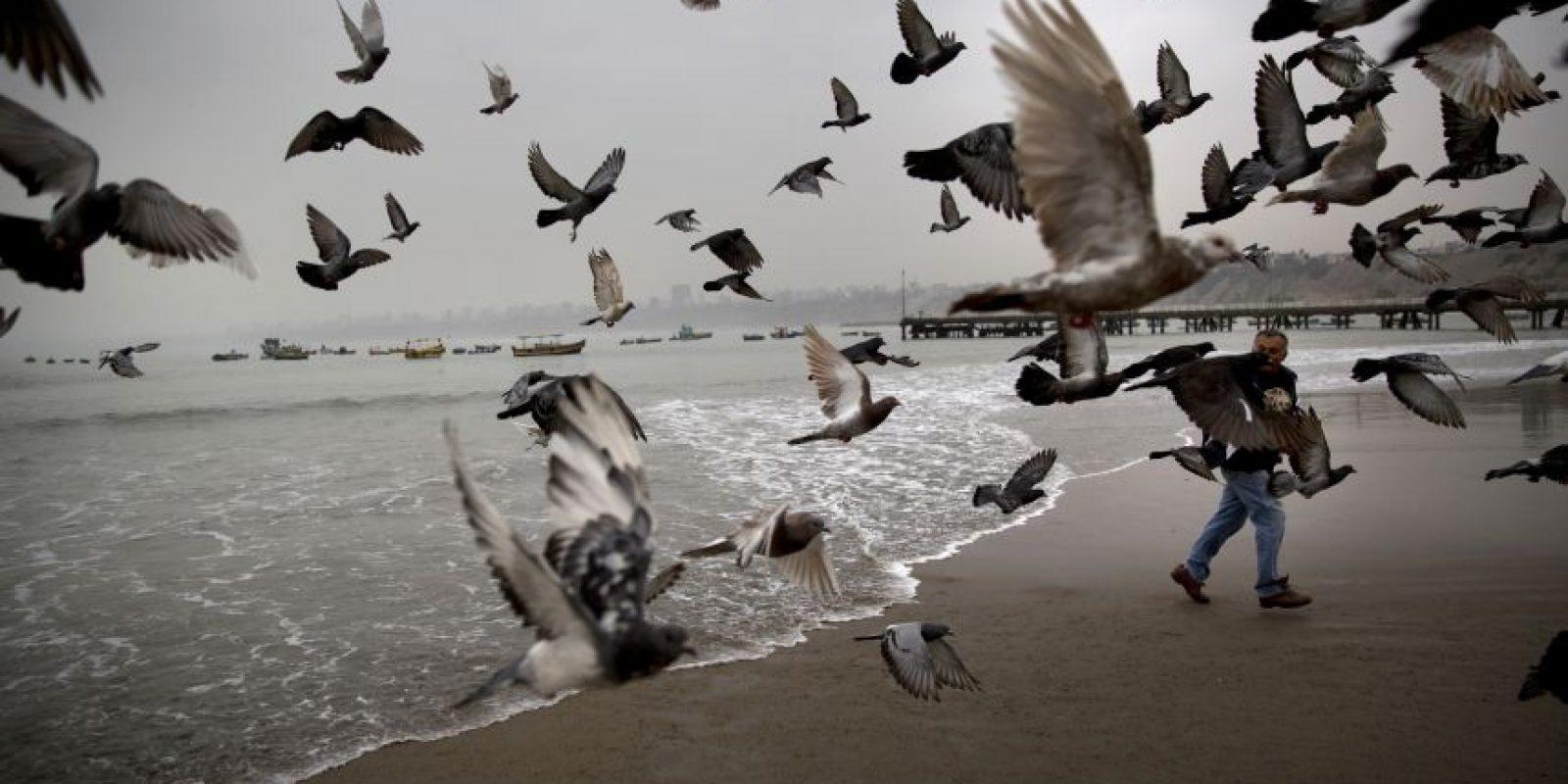 En esta imagen, tomada el 13 de mayo de 2015, Fabian Espinel alimenta a palomas en la playa Pescadores en Lima, Perú. Espinel, que va a la playa cada día a las 5:30 am for desde hace diez años, dice que usa el mar para ayudar a tratar su gota. El hombre, de 65 años, apunta que el mar el esencial, cura y da fuerza. Foto:AP/ Rodrigo Abd