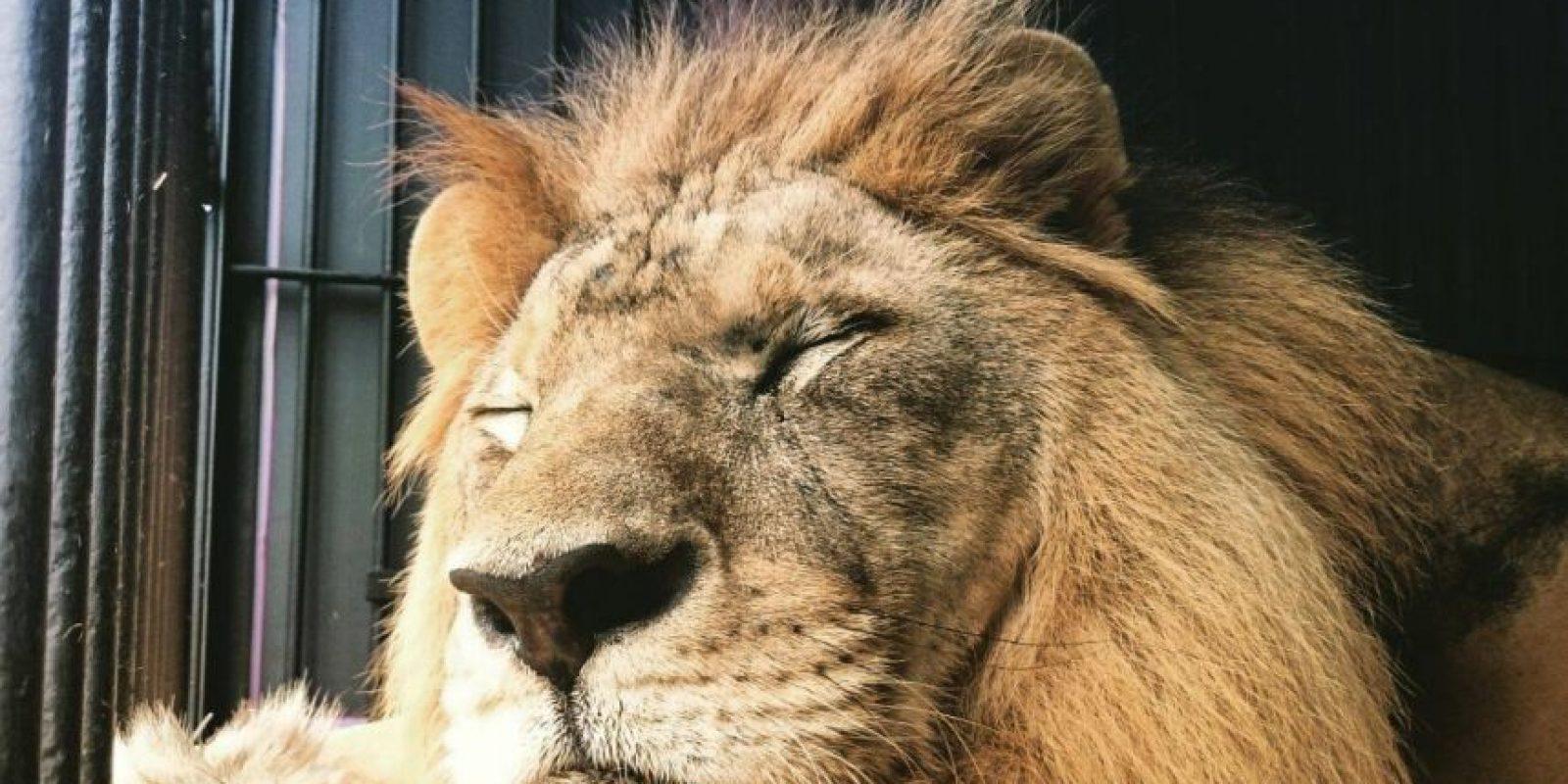 """""""En este espacio comenzará a reconocer nuevos olores, sonidos y tener contacto con otros leones"""" Foto:Facebook.com/RanchoDosGnomos"""