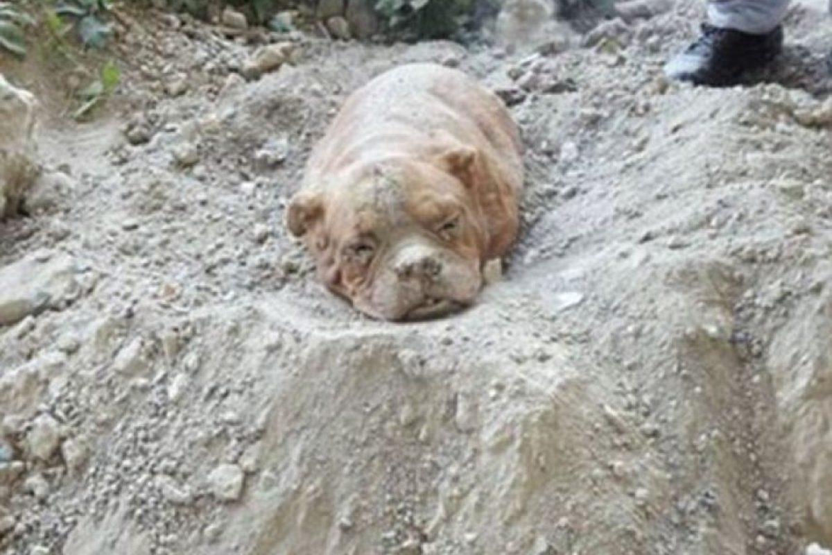 El pobre perro que fue enterrado vivo por su dueño obtendrá justicia. Foto:Vía Facebook.com/pedro.dinis.3994