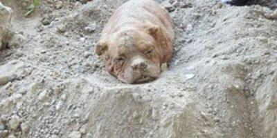 Piden máxima sentencia para hombre que enterró vivo a su perro