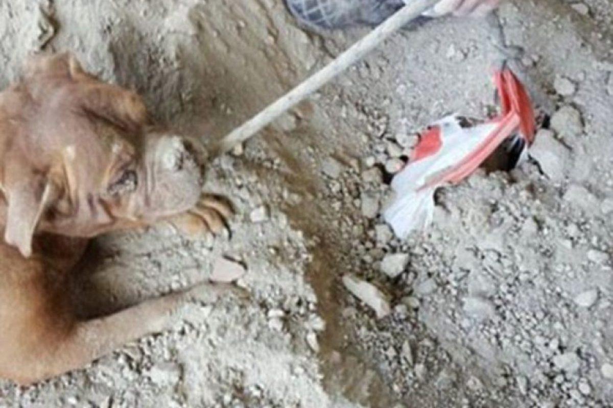 El perro fue atendido por emergencia animal. Foto:Vía Facebook.com/pedro.dinis.3994