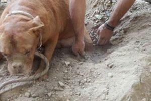 Fue cubierto con piedras, cables y grava. Foto:Vía Facebook.com/pedro.dinis.3994