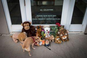 Le pusieron peluches de animales. Foto:vía Getty Images