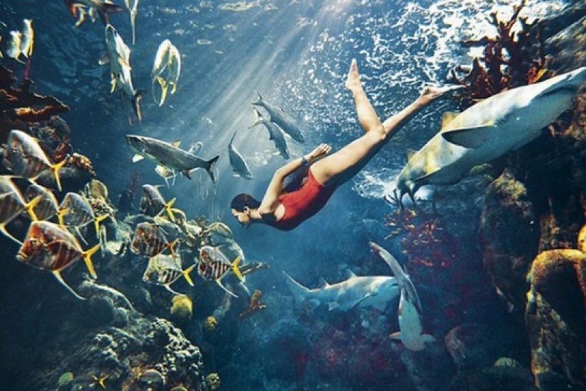 La sesión se realizó en el Florida Aquarium de Tampa, Estados Unidos. Foto:Harper's Bazaar