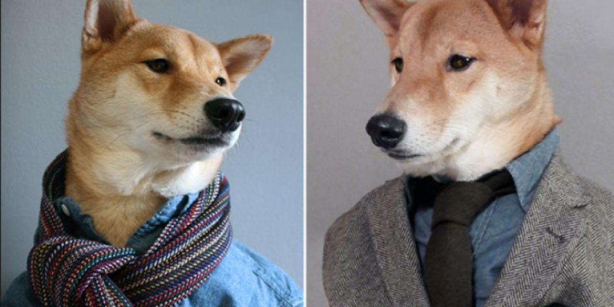 La moda ha llegado a los perros