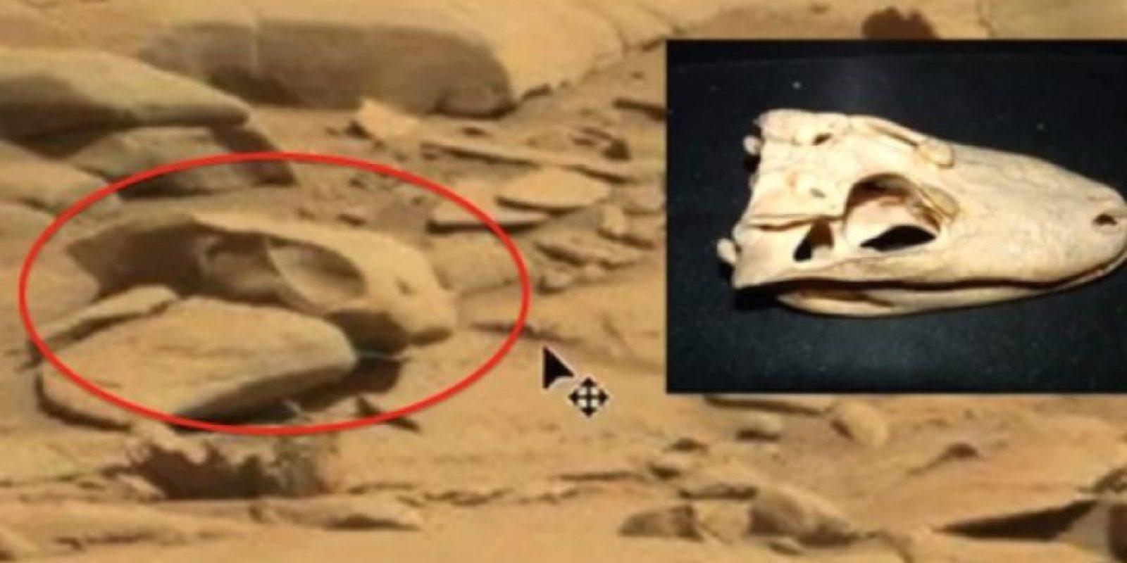7. Un cráneo Foto:NASA