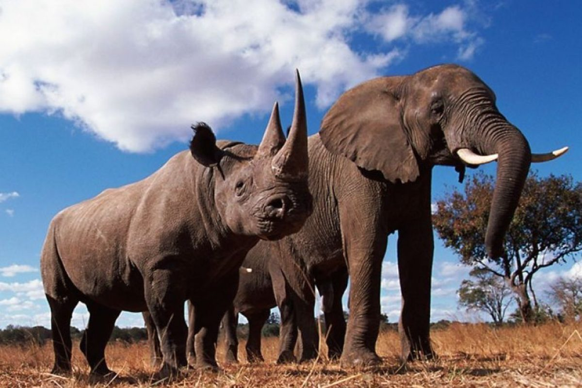 Foto:Cortesía naturepl.com / John Downer / WWF