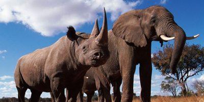 El mundo se une contra el tráfico de vida silvestre