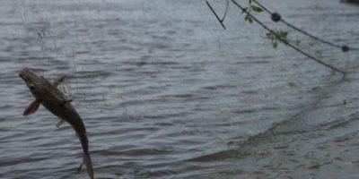 Fiscalía investiga a dos empresas por la muerte de cientos de peces en río La Pasión