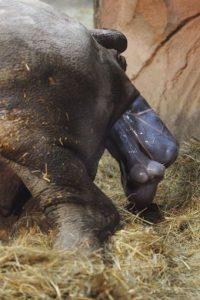 3. Estos cazadores ganan miles de dólares por vender las partes de los rinocerontes. Foto:Getty Images