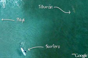 """En las playas de Manly, Australia, mucha gente suele ir a """"surfear"""" y tomar el sol. Sin embargo, ¿estarán conscientes de los animales que habitan cerca de ahí? Foto:Google"""