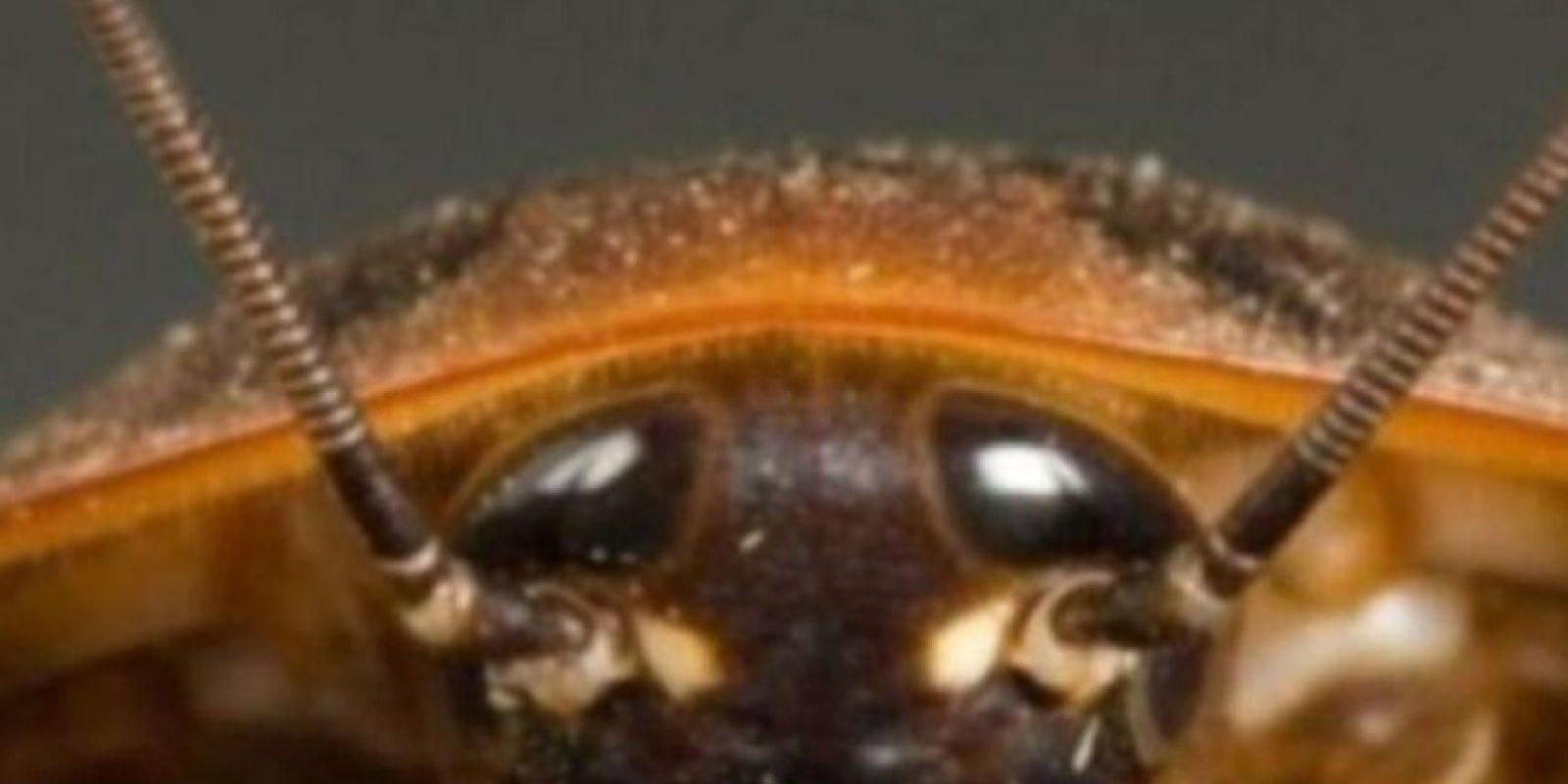 Cucarachas. Foto:vía Getty Images