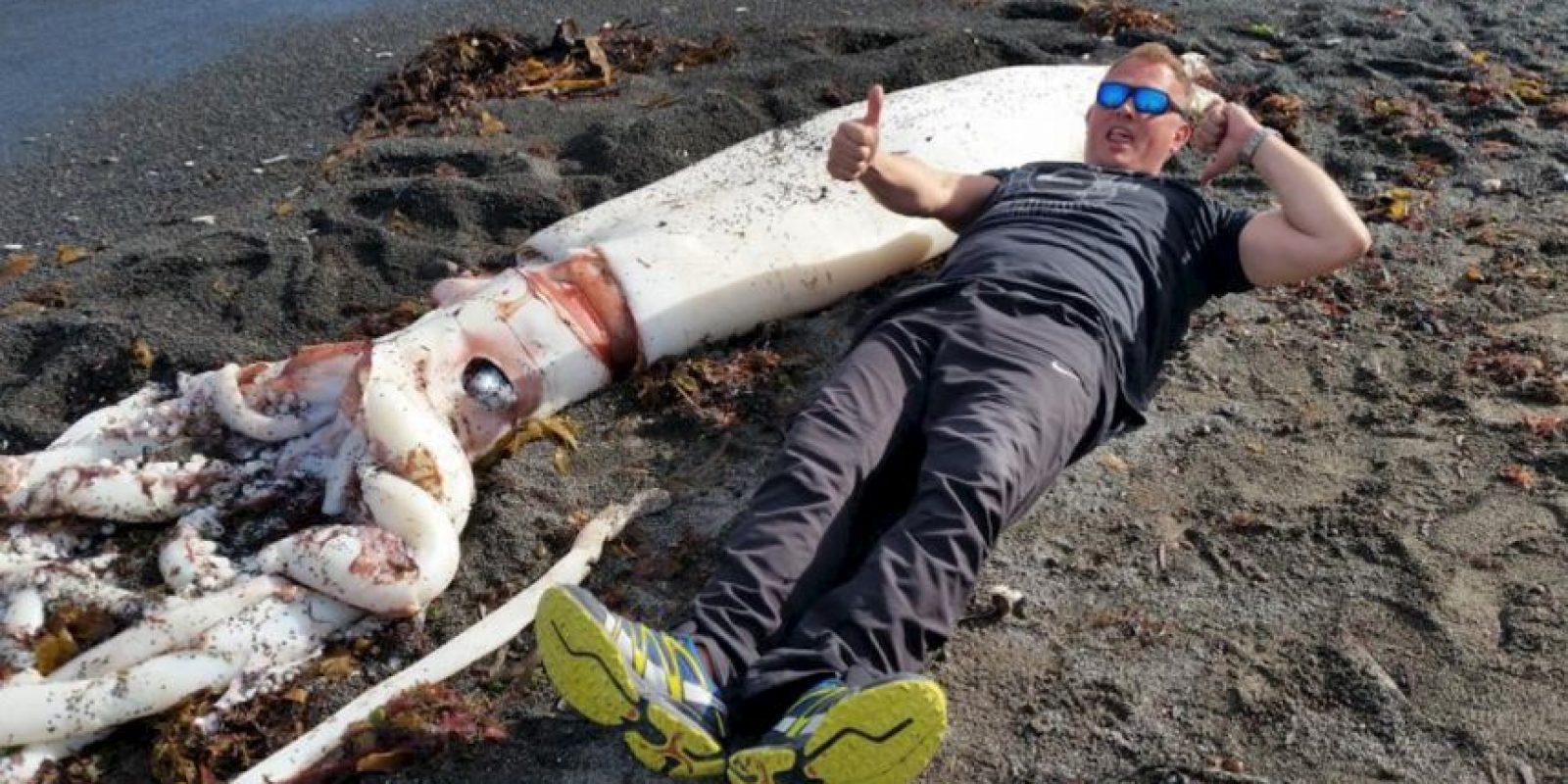 Descubren un calamar gigante en las playas de Nueva Zelanda. Foto:Vía facebook.com/kkmarineaquarium