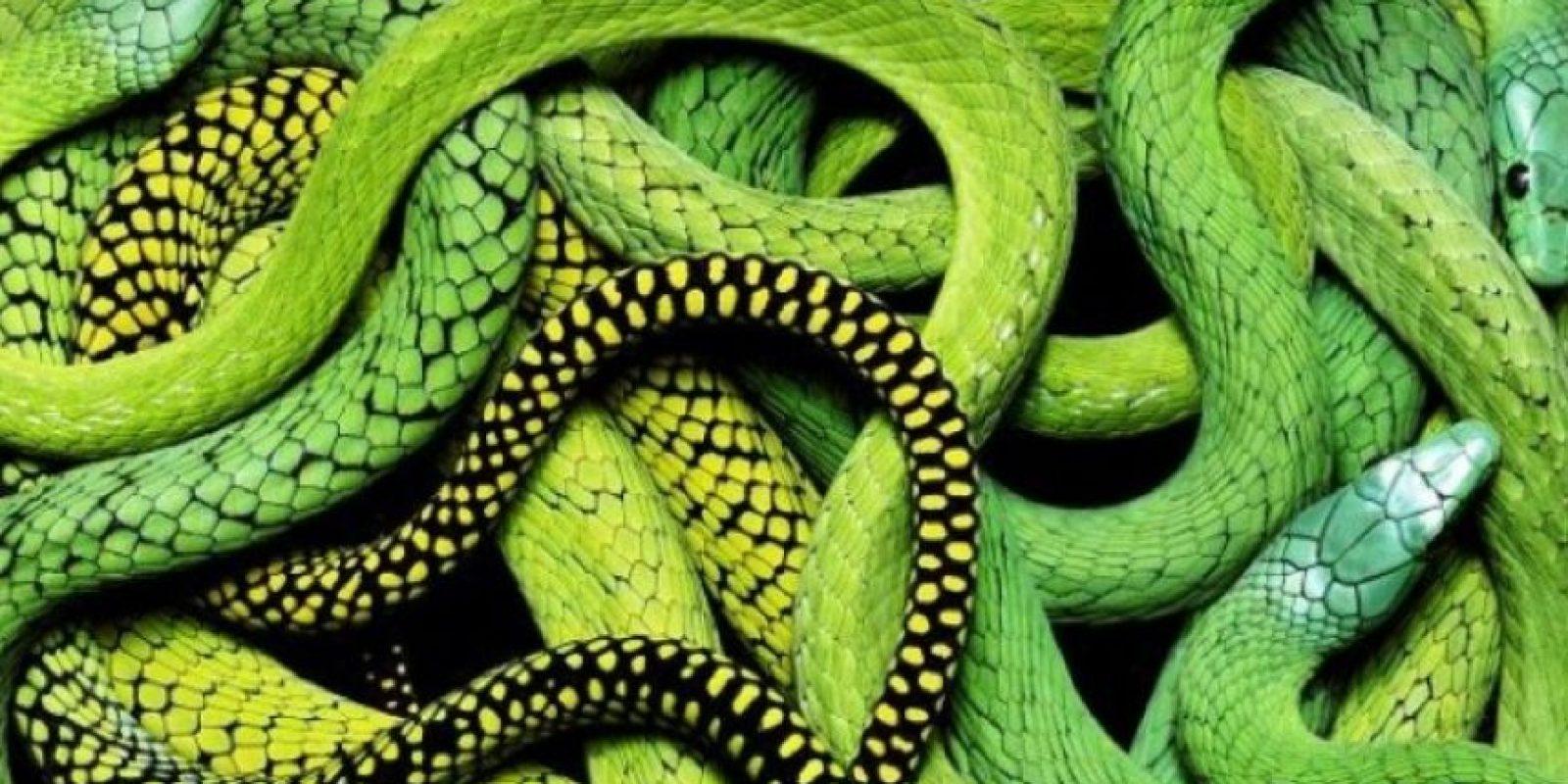 Se cree que las serpientes derivan de algún tipo de lagarto, pero los detalles concretos de su origen no están claros. Foto:Pixabay