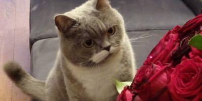 Nació el 17 de agosto de 2007 Foto:Vía Facebook.com/citroneko