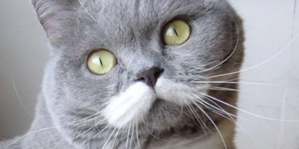 FOTOS: Esta gata está conquistando Internet con sus bigotes