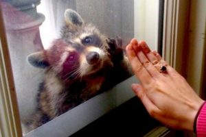 Give me five! Foto: Imgur