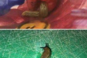 Sophie Bookey de Liverpool en Inglaterra, se encontró con una gran sorpresa al momento de comer frambuesas, pues justo dentro de una de ellas encontró este pegajoso molusco. Foto:Foto: Sophs Bookey