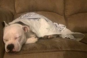 Y el perro y ella se han adaptado perfectamente. Foto:vía Facebook/The Escapades of Ella and Snowy