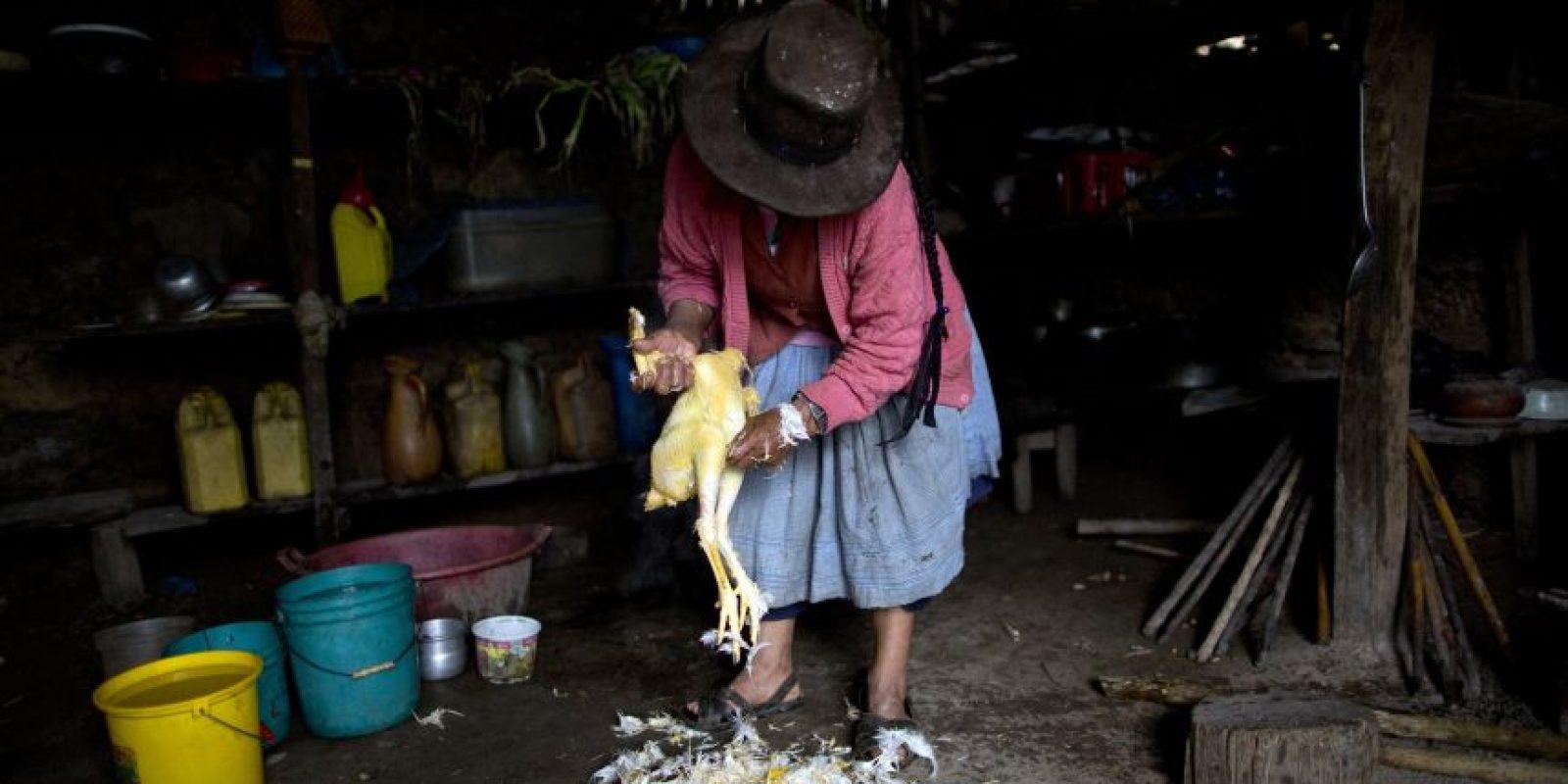 """En esta imagen del 15 de marzo de 2015, Rufina Galvez despluma un pollo para preparar una cena especial en el segundo aniversario de la muerte de su hijo en La Mar, provincia de Ayacucho, Perú. Yuri, un mochilero de cocaína, siempre estaba atento al celular, dijo su madre. La vez que no la llamó durante un viaje en marzo de 2013, la madre, preocupada, leyó las hojas de coca para averiguar qué había pasado. Cogió un puñado en una mano y las soltó lentamente sobre su pollera, según la costumbre. """"Las hojas cayeron de espalda, una mala señal"""", pensó. Foto:AP Foto/Rodrigo Abd"""