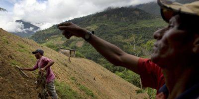 En esta fotografía tomada el 13 de marzo de 2015, el cultivador de coca Alfredo Mosco, de 44 años, a la derecha, le da instrucciones a Donato Mosco, su joven empleado, mientras quitan la maleza de un cultivo de coca, en La Mar, provincia de Ayacucho, Perú. El transportar cocaína desde este remoto valle es casi la única manera de ganar un ingreso significativo en esta región económicamente deprimida donde un peón gana menos de diez dólares al día. Foto:AP Foto/Rodrigo Abd