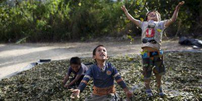 En esta imagen del 13 de marzo de 2015, de izquierda a derecha, Yohan, de 4 años; Cristian, de 7; y Angelo, de 6, juegan lanzando hojas de coca al aire en La Mar, provincia de Ayacucho, Perú. Cargar cocaína desde el remoto valle es casi la única forma de ganar un salario decente en esta región, donde un campesino gana menos de 10 dólares al día. Además de cobrarse vidas jóvenes, esta práctica ha llenado las prisiones peruanas de mochileros de cocaína, mientras sus jeves eluden la prisión. Foto:AP Foto/Rodrigo Abd