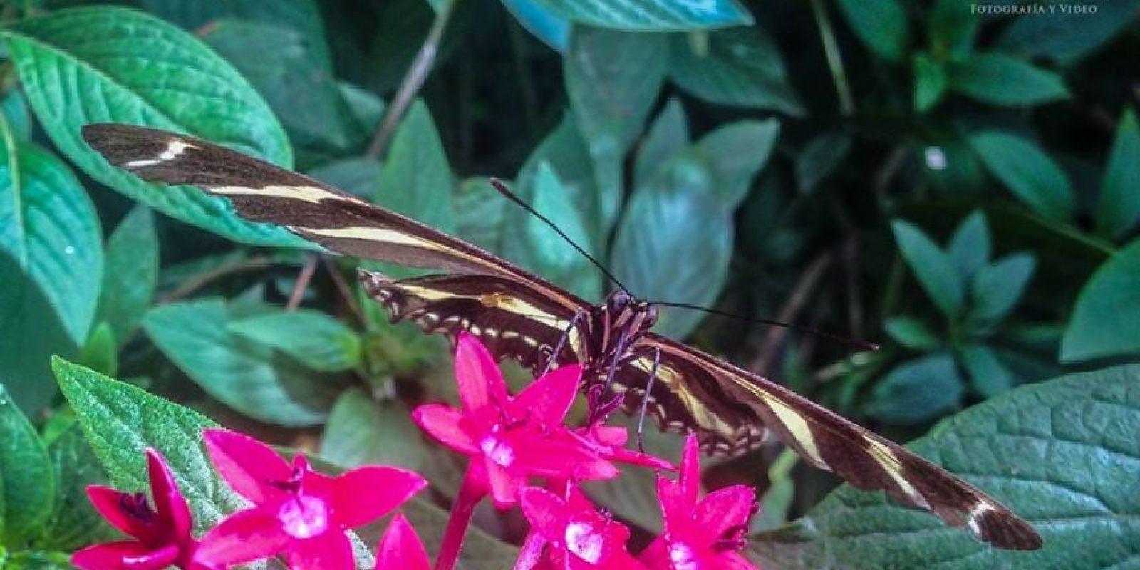 Foto:Facebook Reserva Natural Atitlán