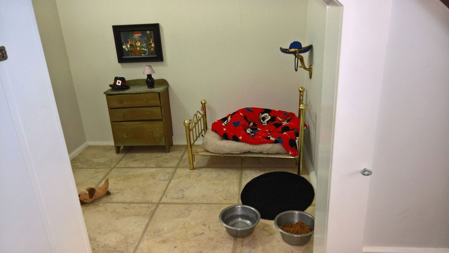 perro, habitación. harry potter, poncho