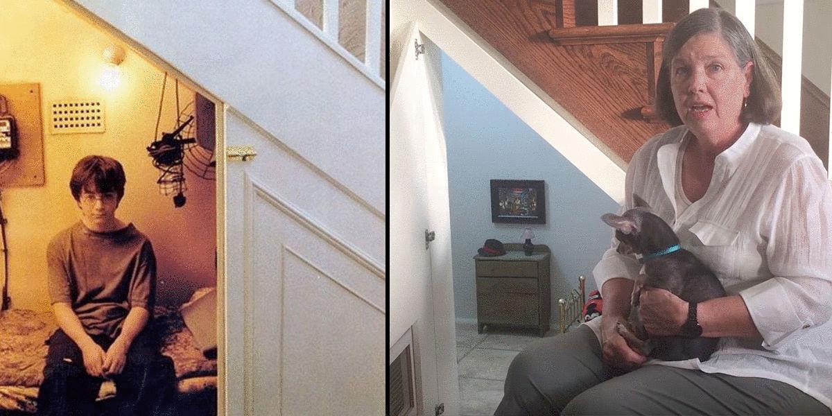 perro, chihuahua, habitación, harry potter