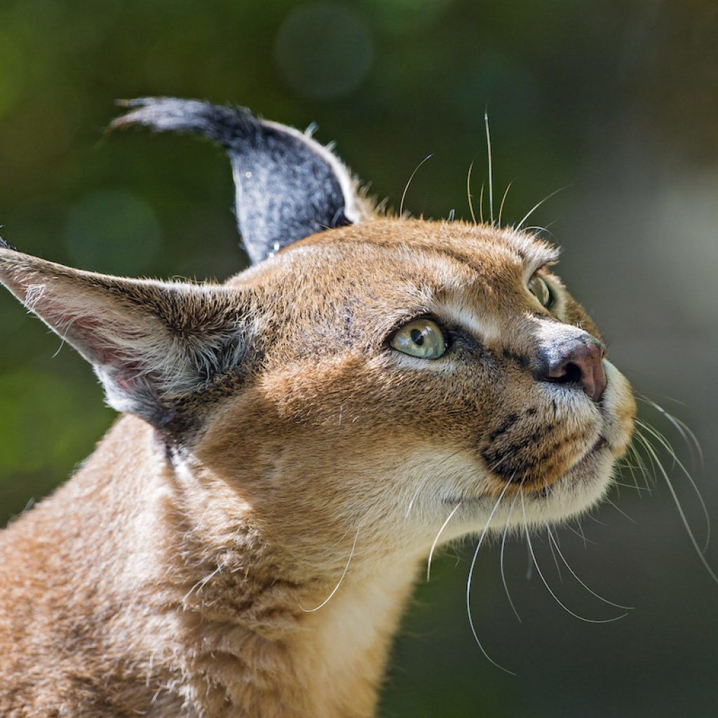gatos mas bonitos del mundo