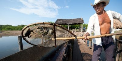 Más de 70 mil personas de la parte baja de la cuenca dependen de una u otra forma de la influencia del río San Pedro Mezquital y de sus crecidas Foto:© Octavio Aburto/WWF
