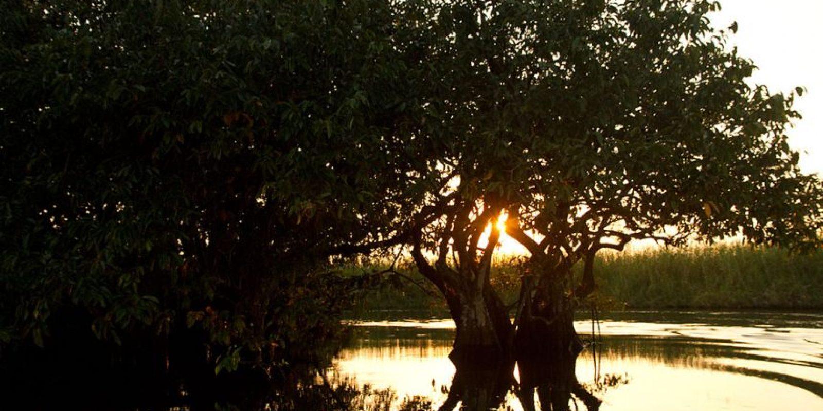 Marismas Nacionales alberga el manglar más extenso del Pacífico mexicano, que depende completamente del equilibrio de los flujos de agua dulce y salada Foto:© Rodolfo Pérez/WWF