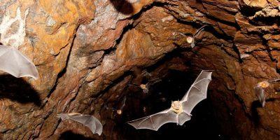 Salida de murciélagos al atardecer en una cueva en las inmediaciones de El Venado, Nayarit. Foto:© Pablo Fregoso/WWF