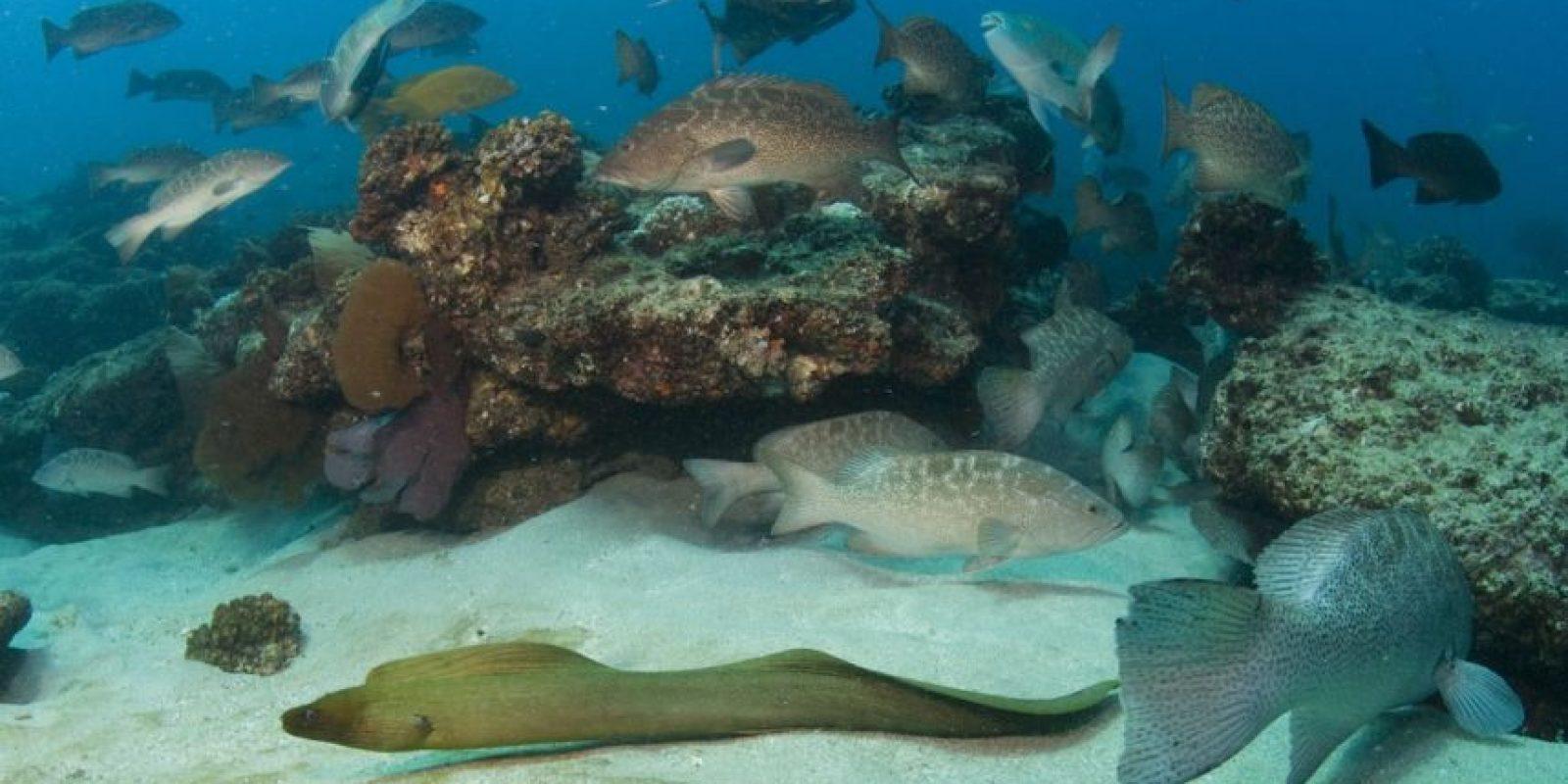 Cabo Pulmo tiene una gran importancia ambiental que radica en la gran cantidad de especies marinas que habitan en el lugar y en que en sus aguas se ubica el arrecife de coral más septentrional del Pacífico Este, único arrecife coralino de toda la península de Baja California y uno de los tres únicos arrecifes vivos que quedan en toda Norteamérica.  Foto:Octavio Aburto