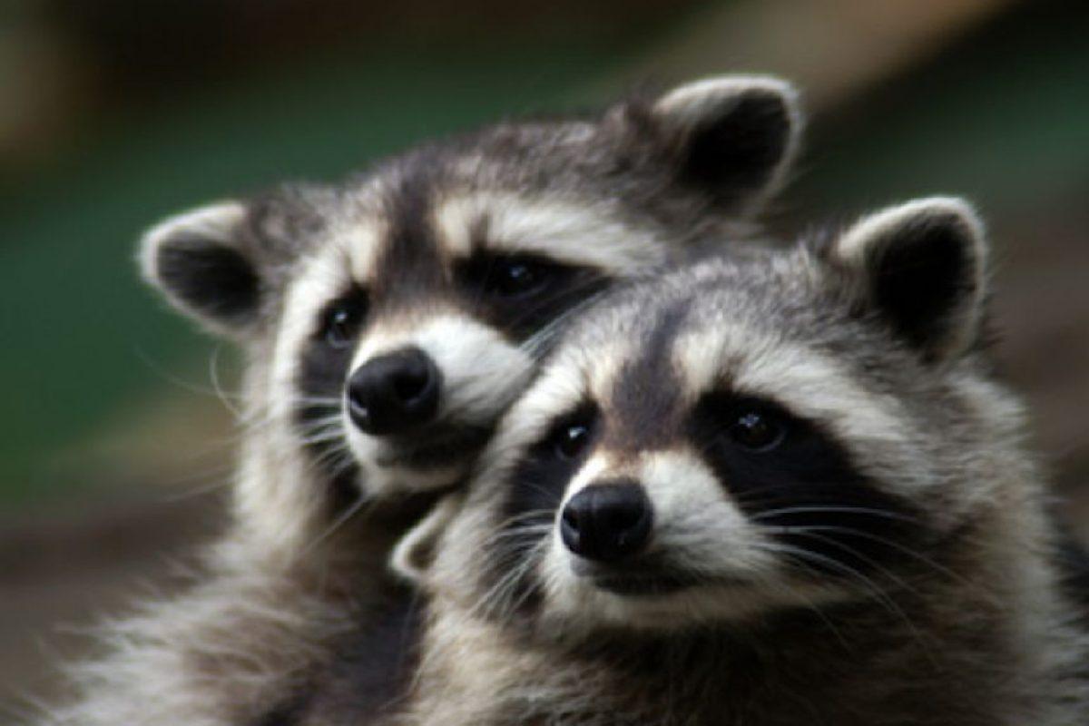 Animales en peligro de extinción en México, conócelos | Publimetro ...