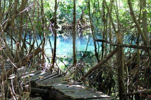 Dzilam de Bravo, Yucatán Foto:Tomada de internet