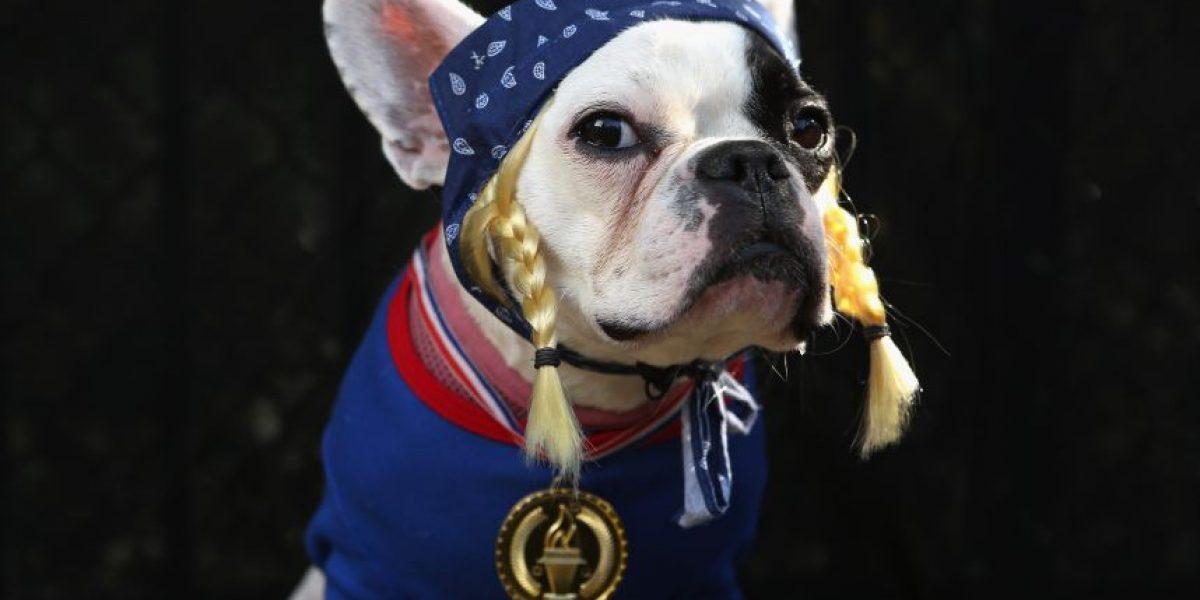 FOTOS: los mejores disfraces de perros para Halloween