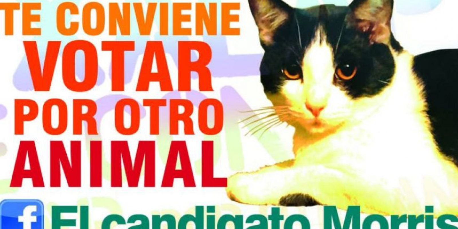 Foto:facebook.com/elcandigatomorris