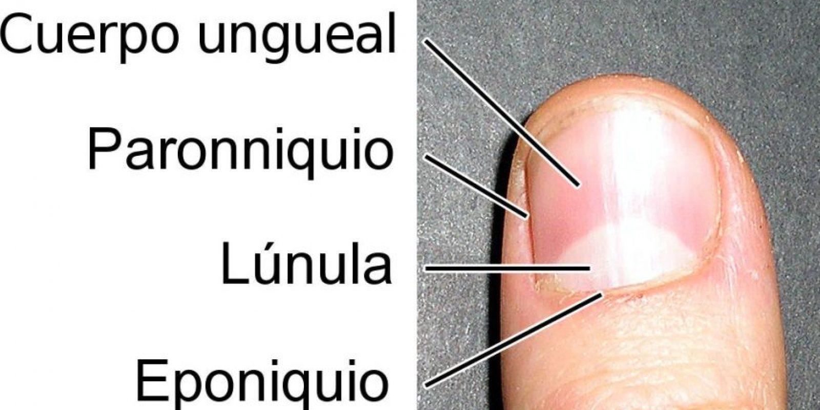 Perfecto Anatomía Del Infierno 2004 Sin Cortar Dvdrip Ideas ...
