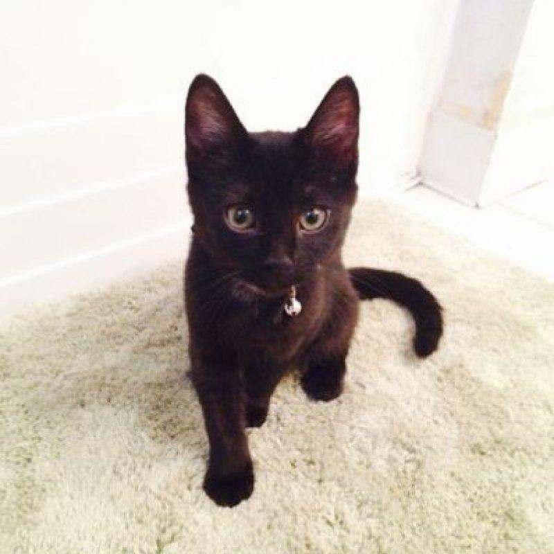 Ver a un gato negro Foto:instagram.com/asweeneyphoto