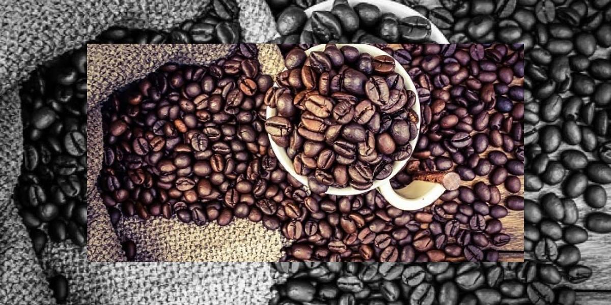 Contratos de futuros de Café, Cacao y Azúcar bajan en NY