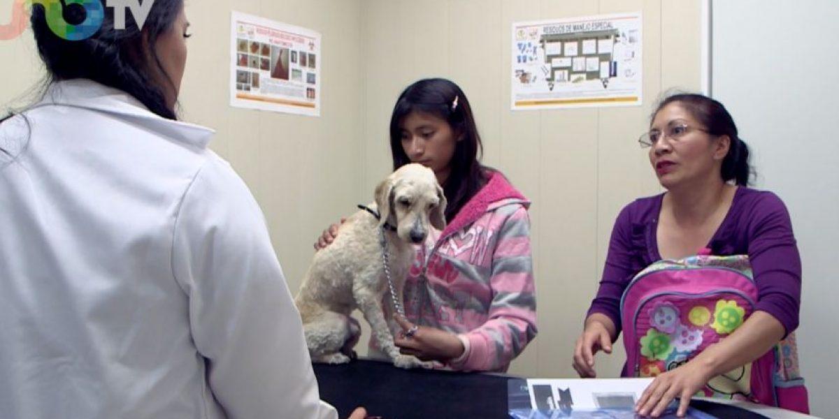 VIDEO: ER de mascotas, a bajo costo en Iztapalapa