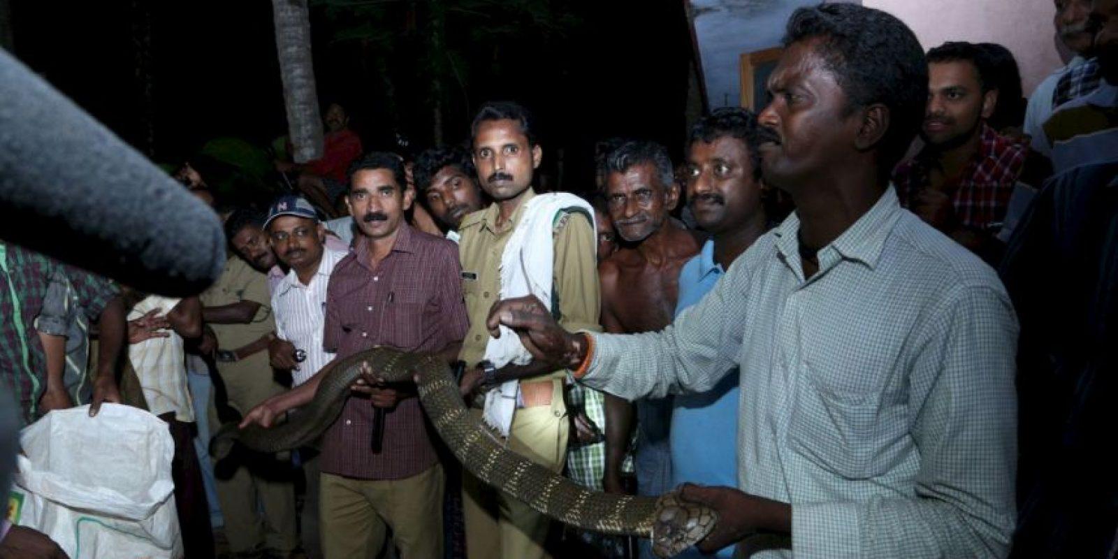 Él ha desistido. Sigue rescatando serpientes. Foto:vía Facebook