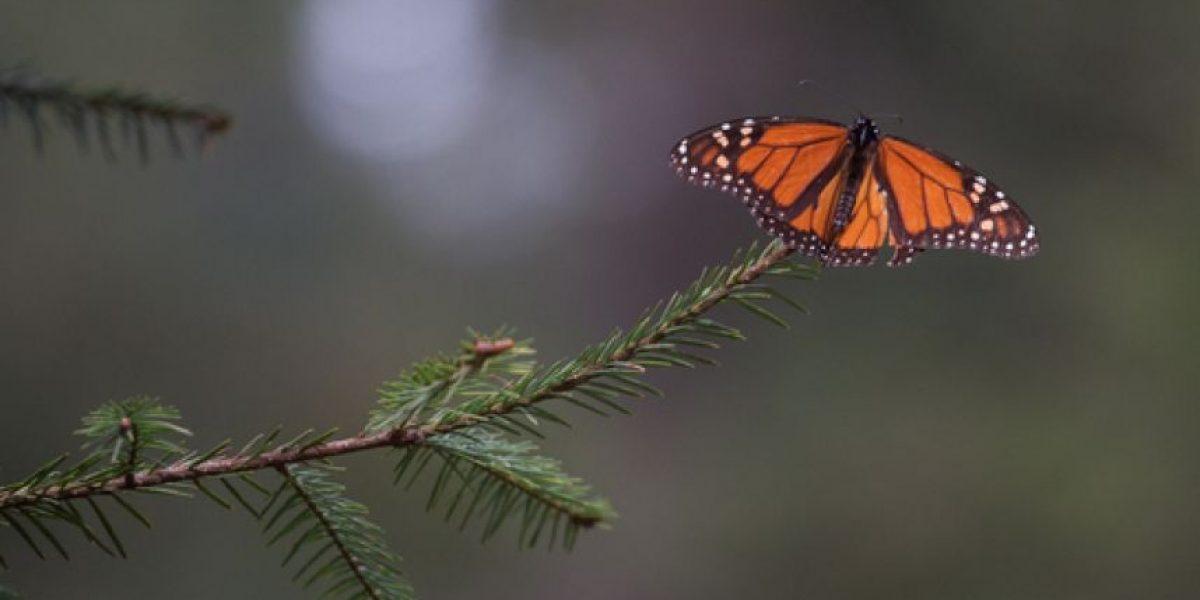 Asiste al mes de las mariposas monarca en Chapultepec
