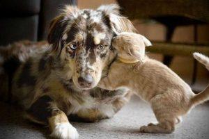 Otras tiernas y extrañas amistades Foto:Pinterest