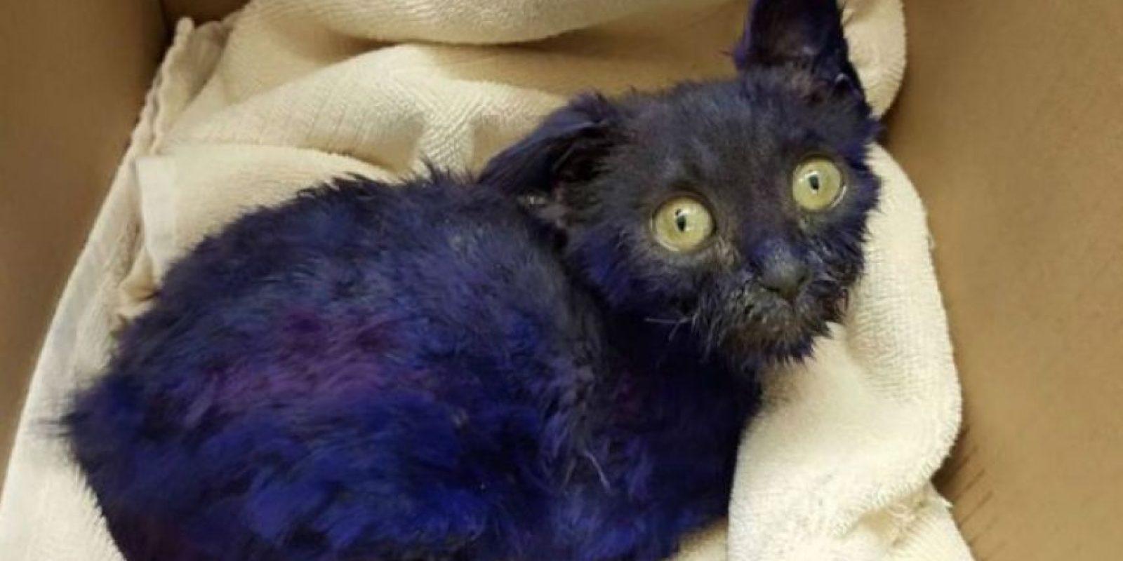 La fundación Nines Lives ayudó a este gatito luego de sospechar que fuera utilizado como cebo de peleas de perros. Foto:facebook.com/NineLivesFoundation