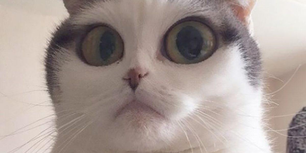 Snapchat para mascotas, sensación en las redes