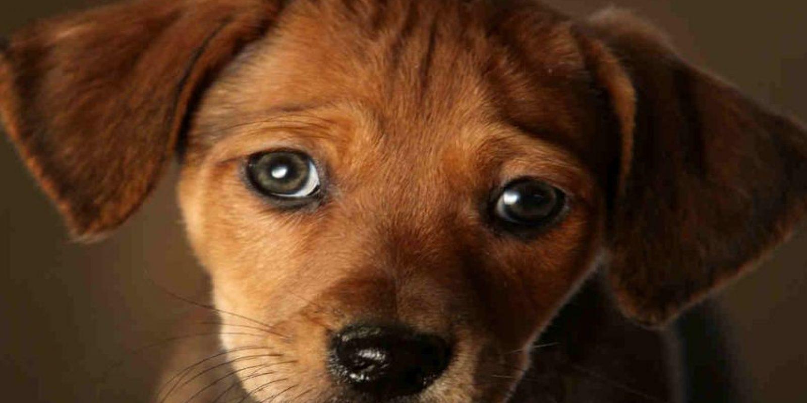 Sus ojos grandes y expresivos son la debilidad de muchas personas. Foto:Getty Images